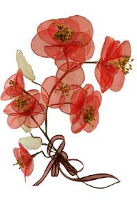 bunga organza