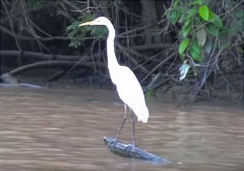 Sabah river safari